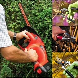 landscaping business pruning shrubs